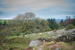 Champ de pierres sèches sur Dartmoor Photos stock
