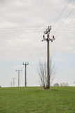 Champ de poteaux de l'électricité d'électrification Photographie stock