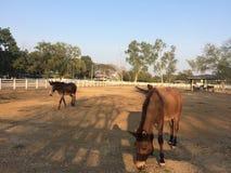 Champ de ranch de ferme de chevaux de cheval Images stock