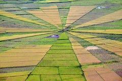 Champ de rizière de toile d'araignée Image libre de droits