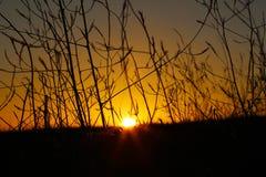 Champ de silhouette d'herbe avec le coucher de soleil Photos stock