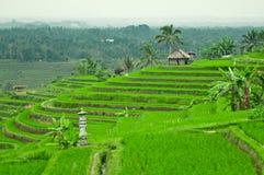 Champ de terrasse de Bali Photos stock