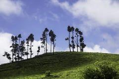 Champ de thé dans Coonoor, Inde Photo libre de droits