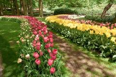 Champ de tulipe dans des jardins de Keukenhof, Lisse, Pays-Bas photographie stock