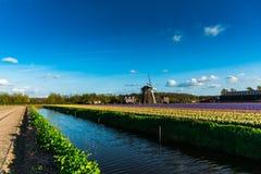 Champ de tulipe et vieux moulins dans le netherland Photographie stock libre de droits
