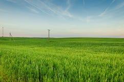 Champ de vert de Rye et ciel bleu Image stock