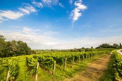 Champ de vigne dans la campagne italienne image stock