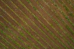 Champ de vignoble de raisin de vin rouge Images libres de droits