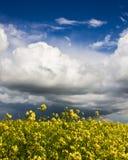 Champ de viol et ciel nuageux Images stock