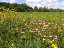 Champ de Wildflower de l'Ohio Photos libres de droits