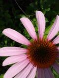Champ de Wildflower de l'Ohio Photo libre de droits