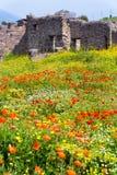 Champ des fleurs à Pompeii, Italie photographie stock