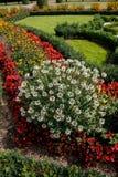 Champ des fleurs avec les fleurs rouges, jaunes et blanches l'en public ou photos stock