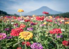 Champ des fleurs et de la montagne Fuji de cosmos Images libres de droits