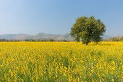 Champ des fleurs jaunes Photos stock