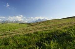 Champ des fleurs, Kirghizistan Images libres de droits