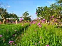 Champ des fleurs près de la manière avec le ciel bleu photographie stock