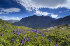Champ des fleurs sur un fond des montagnes Photographie stock