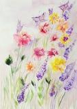 Champ des roses et des lupines avec des papillons Images libres de droits