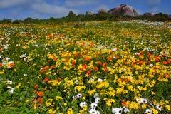 Champ des wildflowers photo libre de droits