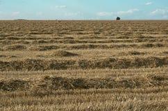 Champ du blé nettoyé Image libre de droits