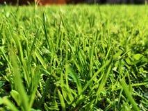 Champ entièrement d'herbe verte photographie stock libre de droits