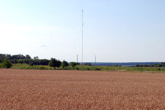 Champ et antenne de blé pour la communication cellulaire Images libres de droits