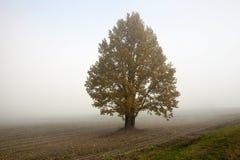 Champ et arbre, brouillard Image libre de droits