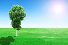 champ et arbre dherbe verte avec le soleil et le ciel photographie stock libre - Arbre Ciel