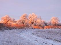 Champ et arbres neigeux dans la soirée, Lithuanie photographie stock libre de droits