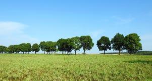 Champ et beaux vieux arbres, Lithuanie Photo stock