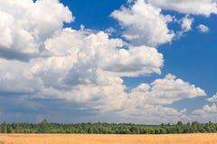 Champ et ciel avec l'oiseau peu de silhouette Photo libre de droits