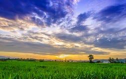 Champ et ciel de maïs avec de beaux nuages Photo libre de droits