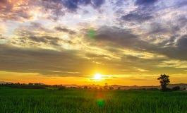 Champ et ciel de maïs avec de beaux nuages Image stock