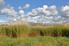Champ et cumulus herbeux images stock