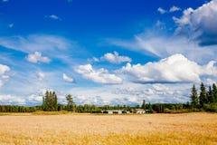 Champ et ferme de blé d'or dans le pays rural Finlande Images libres de droits