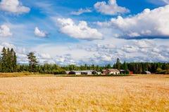 Champ et ferme de blé d'or dans le pays rural Finlande Image stock