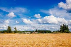 Champ et ferme de blé d'or dans le pays rural Finlande Photographie stock
