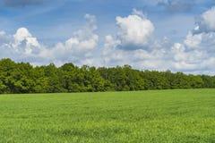 Champ et forêt verts sur l'horizon images libres de droits