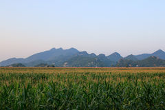 Champ et montagne de maïs Photo stock
