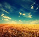 Champ et nuages de blé sur le ciel Image stock