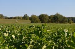 Champ et pré verts sous le ciel bleu s'élevant dans la nature, la forêt, les arbres et l'agriculture en automne images libres de droits