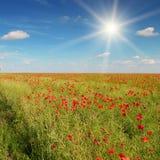 Champ et soleil sur le ciel bleu photos libres de droits