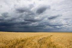 Champ et tempête Photo libre de droits
