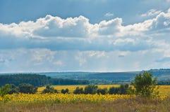 Champ, forêt et nuages Photographie stock libre de droits