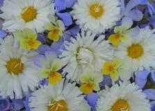 Champ frais de modèle de vert de bouquet de texture de tissu de flowe floral de marguerite de ressort de fleur de fleur de margue Photos stock
