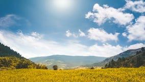 Champ jaune en canyon de montagne, ciel nuageux bleu clips vidéos
