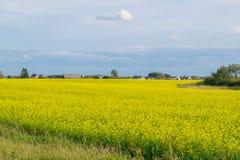 Champ jaune près du village russe images libres de droits