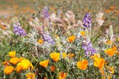 Champ mélangé des Wildflowers Images stock