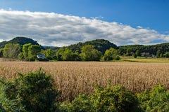 Champ, montagnes et ciel de maïs Image stock